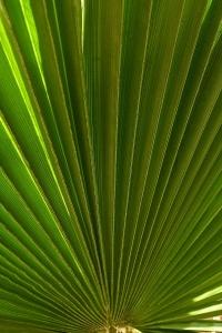 palm-65532_1280